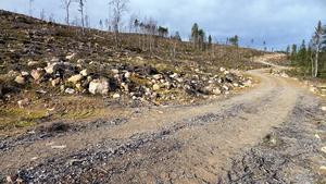 Brutalt byggda skogsbilvägar med därefter storskaliga kalhyggen, leder till biologisk utarmning– avskogning – avfolkning.