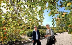 Sylvia Miletun och Inga Pers, från Insjön och Siljansnäs, beundrade ett av Stabergs äppelträd, som dignade av frukt. Foto: Johnny Fredborg