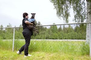 Peggy Lindqvist och Uma följer tävlingarna i väntan på att det ska bli Umas tur att springa. När det väl var dags var hon snabbast av alla i lopp nummer fyra..