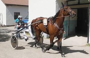 Sanity blev fyra i storloppet Finlandia Ajo.