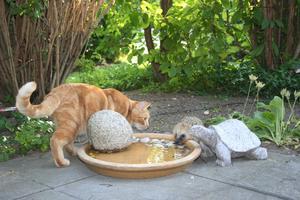 Räcker vattnet åt mig, killar, undrar Morris, och samsas med igelkotten och stensköldpaddan.