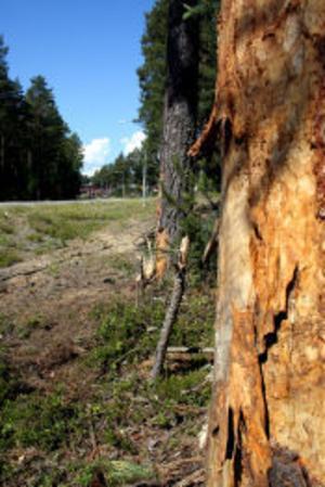 Bilen har troligen gått in i två träd nedanför Böle skola. Två personer fick föras till sjukhus och vårdas på intensivvårdsavdelningen.