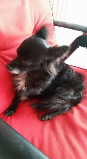 Hunden avlivades på onsdagen, efter ett beslut av Jordbruksverket.