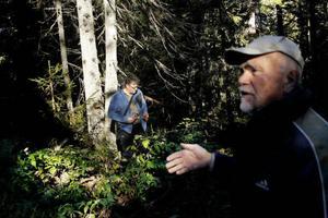 Granskogen här består av blädningsskog. Där plockhugger man äldre träd för att ha trädkontinuitet.