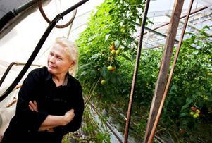 """""""Klart det svider i hjärtat, men jag har bestämt mig för att lägga ner. Tomatodlingen i Sveg blev spiken i kistan"""",                    säger Marian Stranne, som snart börjar riva sina växthus i Görvik. Foto: Håkan Luthman"""