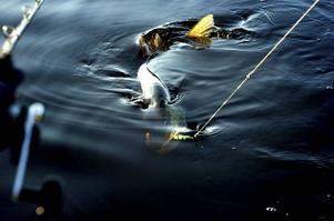 Gäddfisket är motorn i det ökade intresset för sportfiske, enligt Andreas Ollinen.