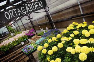 Många krukor. På handelsträdgården har man odlat främst krukväxter och utplanteringsväxter.