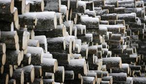 Timmertravarna kommer snabbt att växa utanför sågen i Hissmofors. Normalt sågas 120 000 kubikmeter per år. Nu väntas den volymen öka.