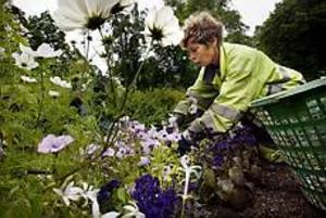 Foto: GUN WIGH Ojämn kamp. Inger Nilsson ansar rabatten med sommarblommor i Stadsträdgården. Hon är ensam om att hålla undan ogräset som hotar att ta över.