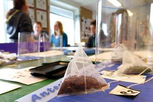 Gällöelevernas insats blir en del av underlaget för en uppdatering av Tea Bag Index, tepåseindex, som används för att beräkna klimatförändringar på grund av utsläpp av koldioxid när växter bryts ned.