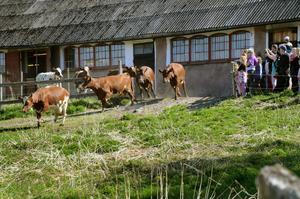 Glädjen var total både bland korna och de 50-tal besökarna på söndagen.
