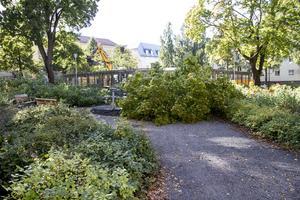 Två träd har avverkats för att göra Skolparken ljusare och tryggare.