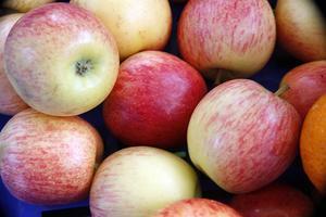 Hur man beskär ett äppelträd fick deltagarna se häromdagen.