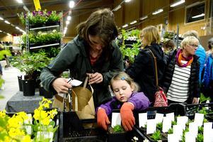 Astrid Sandström hjälper mamma Sandra med att packa ner en Middagsblomma i påsen.