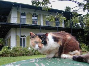 Ernest Hemingway levde och skrev på Key West mellan 1929 och 1939. Hemmet är numera ett museum som även tar hand om katter.   Foto: Andy Newman/Florida Keys News Bureau