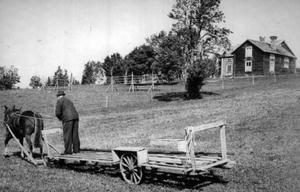 Trekilen Jämtland 1953. Olof Zakrisson på väg efter mer hö att köra in. Hästen heter Tindra. Inskickat av Astrid  Lundow.