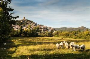 På Sardinien finns det fler får än människor. I bakgrunden byn Possada..