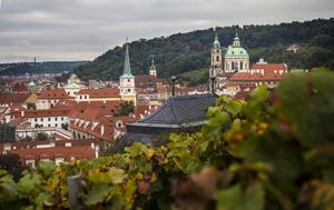 Alldeles intill Pragborgen odlas det vin.