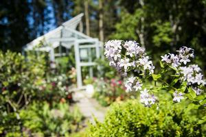 På området finns flera trädgårdar, här är den Bibliska trädgården.