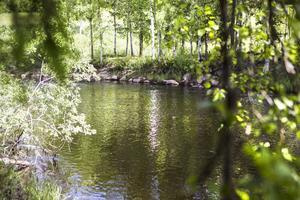 Ett utbrott av kräftpest har konstaterats i Ygssjön och Skarpån utanför Färila.