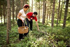 Gertrud Edström och Flavio Mancini anordnar varje år inspirationsutflykter i naturen med inriktning på det ätbara: nässlor, bär – och svamp.