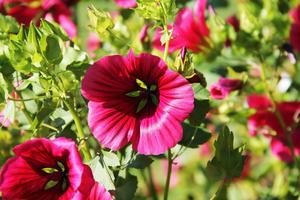 Det växer också en hel del blommor i landet på Backa-området i Edsbyn.