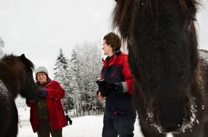 Den behandling som Helena Andrén-Niemi och Margaretha Andersson utför            på hästarna är ett mellanting av massage och akupressur. Hästarna Prinsessan och Kilian gillar beröringen och när de är nöjda tuggar de.  Foto: Håkan Luthman