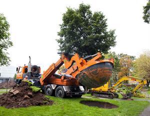 Günter Homan sätter försiktigt ner den tre ton tunga linden i ett förgrävt hål i Stureparken.