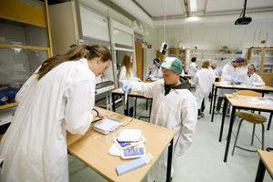Daniel Sundvall, Mörsil, ska vara med och bygga en släktkarta för sill och strömming. Elever på Mörsils skola gör den första undersökningen i forskningsprojektet som fortsätter i höst.