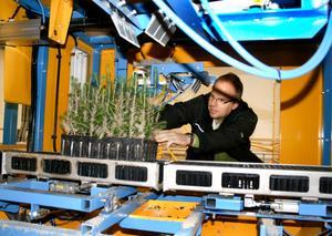 Sand sprutas på plantan som sedan härdas med lufttorkning. Produktionsledaren Örjan Bilock kontrollerar plantorna. BILD: SAMUEL BORG