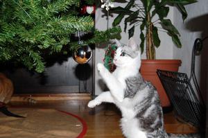 Det är roligt att leka med de blanka fina julkulorna tycker Elza ca ½ år gammal.