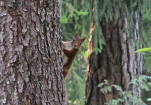 Ett plötsligt möte med en orädd liten ekorre.