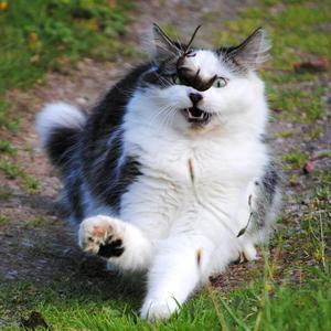 7. Det gäller att ha fokus, skrev fotografen om sin katt Dexter som leker med sin fångst.
