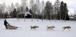 Höger. Terje Frode Bakkes hundar vill till vänster medan Terje försöker att få dem att svänga höger efter starten i Särna.