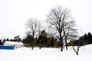 De stora Lindarna från 1830-talet måste fällas och vägen till ridskolan dras över tomten om de nuvarande planerna för Valbo Köpstad genomförs. Ändå tycker inte kommunen att Bernt Bergström är sakägare.