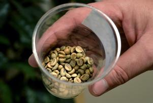 Kaffebönor från Indien.