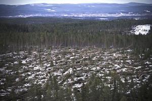 Det är mycket skog som ligger ner efter stormen. Ett stort område bakom Bränta, cirka en halvmil utanför Ljusdal, är hårt drabbad.