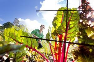 Mangold är en av favoriterna. Jättegod och så fin att man kan ha den i blomsterbuketterna, tycker Eva Hedin.