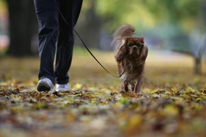 Koppeltvång. Håll hunden kopplad och rädda rådjurskid och småvilt uppmanar Jägareförbundet alla hundägare i dag.