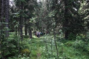 Vandring i finnskog.