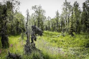 Andersvallens myrområde bjuder på en stor mångfald av växter, fåglar och ovanliga lavar.