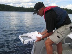 Lasse Nilsson från Kultur & Fritid Gävle satte ut 14000 ålar längs Gästrikekusten. Vi måste hjälpa ålen. Den naturliga invandringen av ålyngel har minskat med 99 procent.