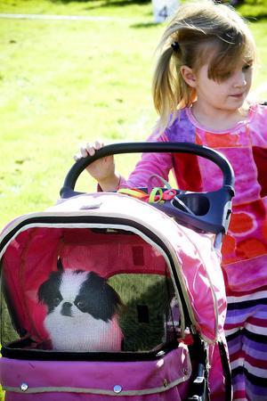 I en liten vagn kikade den åtta månader gamla Hanna fram. Hon är en Japanese chin och vaktades av Emma Storm.