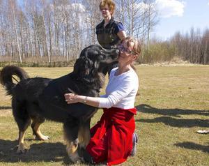 – Min asatrokull – som har namn efter asagudar – är sociala, glada och trevliga hundar, säger Bodil Åslund Röst som driver Elliegårdens kennel i Lillhärdal.