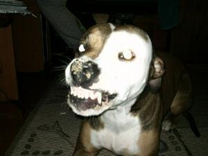 Min dotters hund Troja smyger in i badrummet och