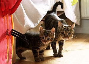 Mamma katt i sällskap med