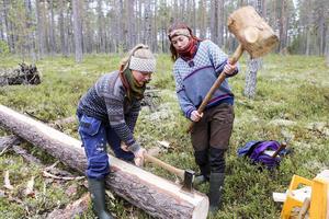 Ett annat gammalt sätt att arbeta på, Joline Tallstig och Julia Falk klyver en stock på längden. Virket ska användas som golv i en glestimrad lada på Bäckedal.