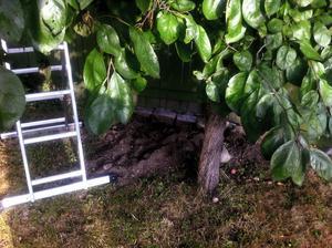 Ett av minnena som grävlingen lämnat ifrån sig på tomten. Grävlingen har tagit sig in mot husets grund genom att gräva sig in mellan husen.