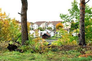 Ett par mäktiga tallar sparas och bildar äreport mot älven och bostäderna på Kajensidan.