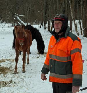 Torsten Norberg med sitt fuxföl Hägern T.H i hagen i Hultom, kanske har han ytterligare en succéhäst i framtiden?